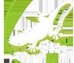 Tiny Gecko in Taunton Logo